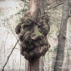 きららの森