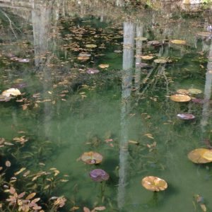 Nameless pond