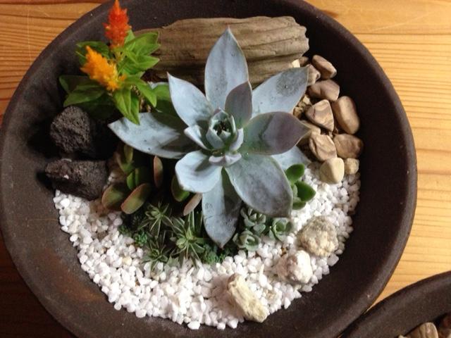 多肉植物の小庭づくり ~Mother's day~